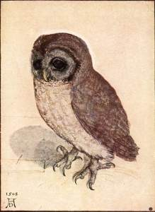 Albrecht_Dürer_-_The_Little_Owl_-_WGA7367